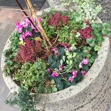 Planter, with plants by Julian and Helen